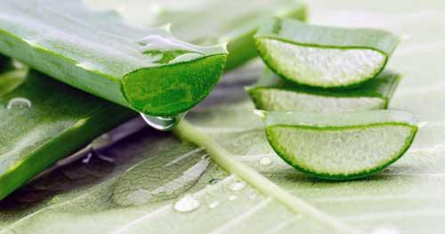 beneficios del aloe vera herbalife