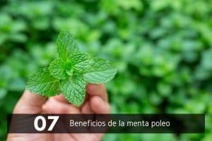7 beneficios y propiedades de la menta poleo